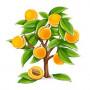 Саженцы Колоновидных абрикосов в Хабаровске почтой