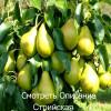12 правил обрезки садовых плодовых деревьев